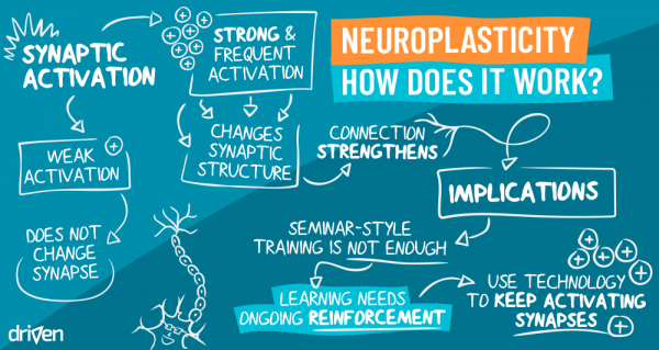 Neuroplasticity - Bootcamp for the brain